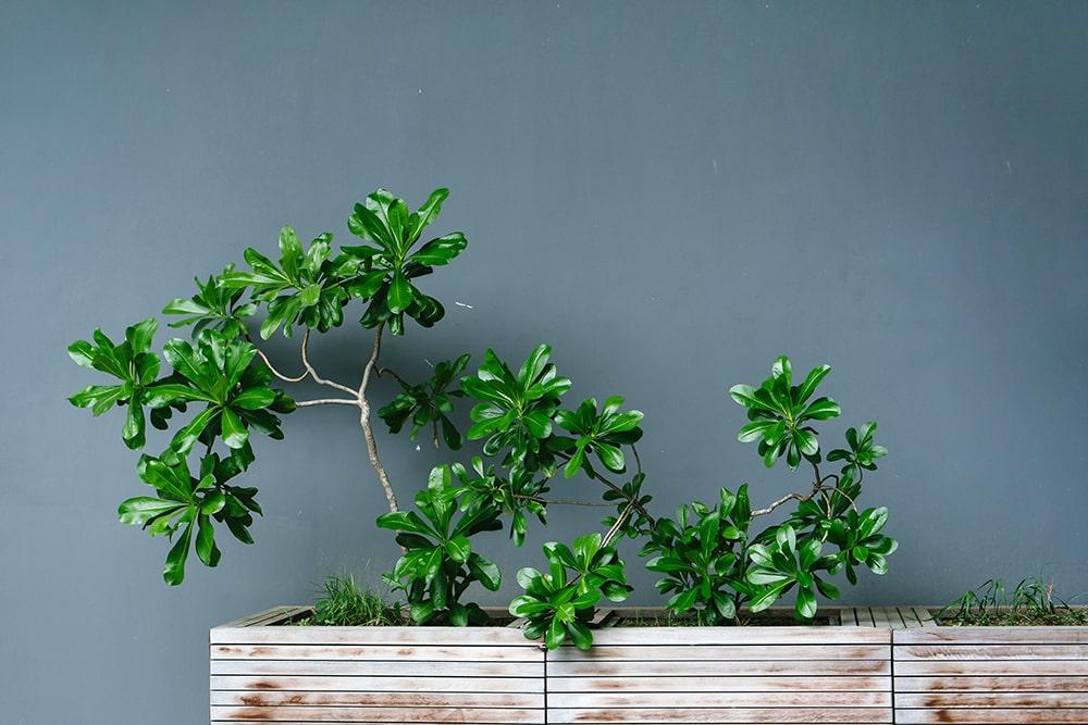 植物 デザイン